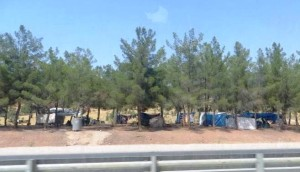 Tarps hung across ropes tied to trees stretched for miles along the highways - the only shelter for tens of thousands.