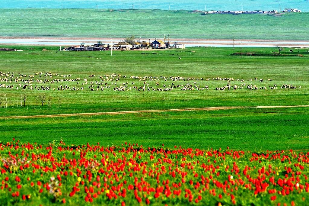 Kalmykia - HOmes on the Steppes B